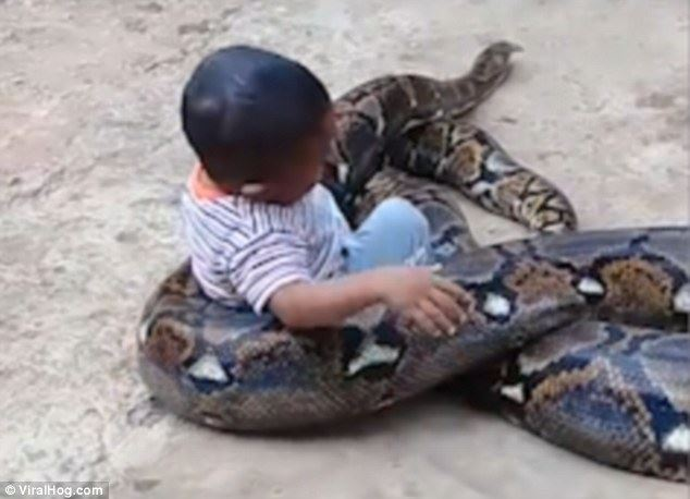"""بالفيديو/ يبدو أن """"صداقة"""" الأطفال مع الثعابين الضخمة أصبحت منتشرة.. لقطات مثيرة تحبس الأنفاس بين طفل وثعبان ضخم!"""