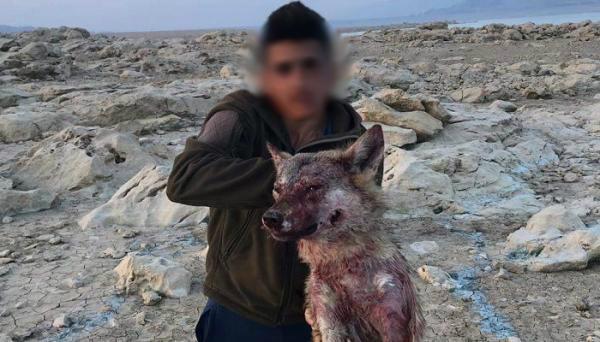 بعدما تباهى بفعلته على فيسبوك...شكوى من green area بحق قاتل ذئب القرعون !