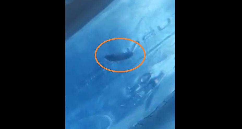 """بالفيديو/ """"دودة"""" تسبح في عبوة مياه معدنية لشركة بارزة في لبنان!"""