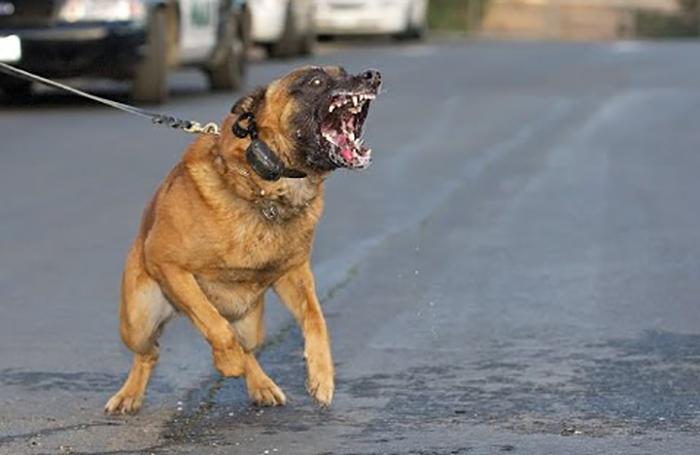 وزارة الصحة تحذر مجدداً من عضات الكلاب الشاردة...وتطلب من أصحاب الحيوانات الأليفة تلقيحها حفاظاً على السلامة العامة