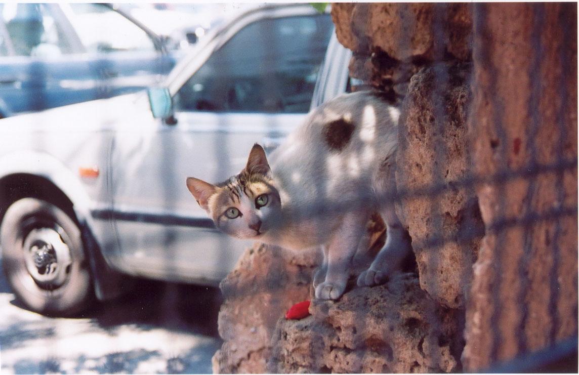 الغارديان: بيروت هي الأرض السحرية للقطط..إنهم في كل مكان !