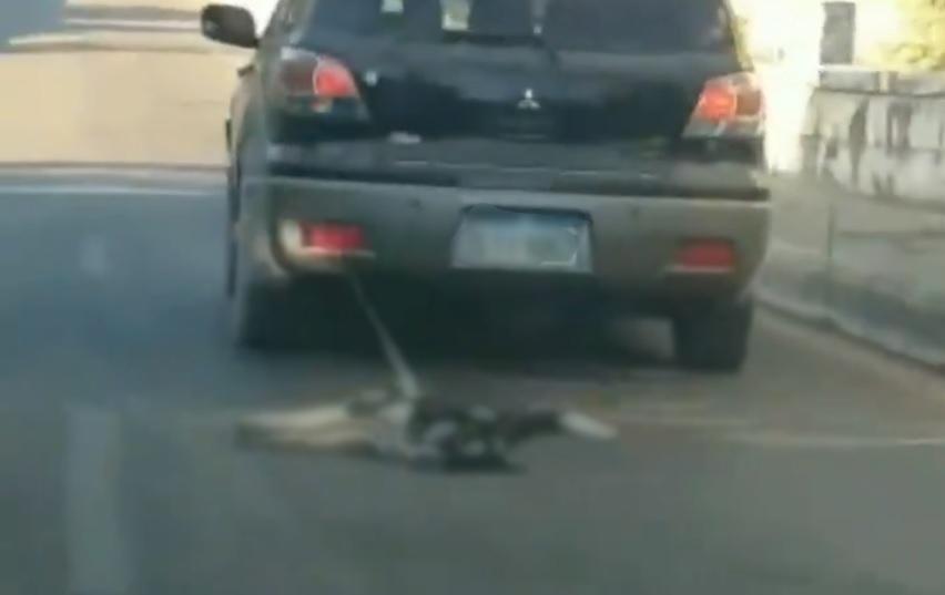 بالفيديو/ مشهد قاسٍ على طريق الدامور...سيارة تجر كلباً بحبل!