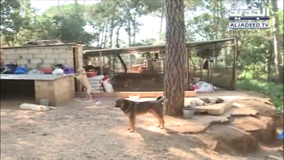 ملثمّون يقتحمون ملجأ للكلاب في بلدة أرصون ويقتلون أكثر من 50 كلباً!
