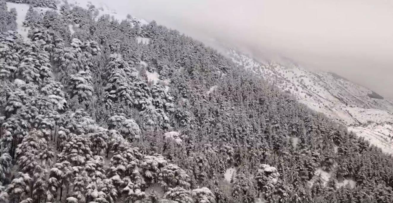 بالفيديو / مشاهد ساحرة من الجو لغابة أرز عين زحلتا مكسوّة بالثلوج