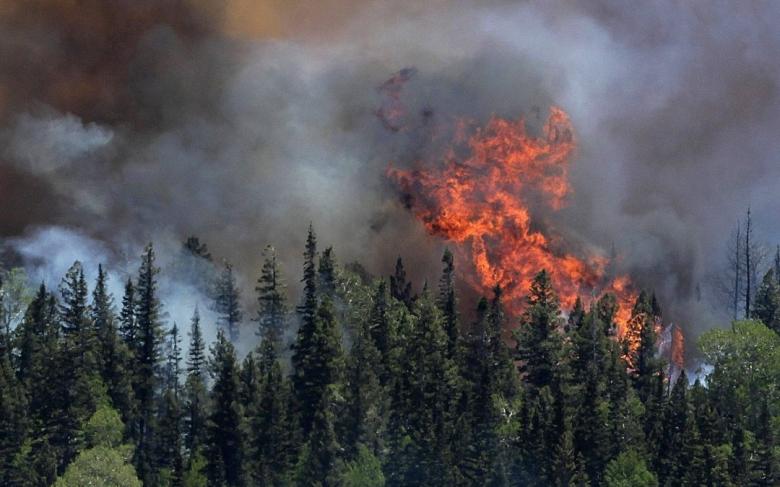 نصائح القوى الأمنية من أجل تفادي حرائق الغابات وكيفية التصرف في حال حدوثها