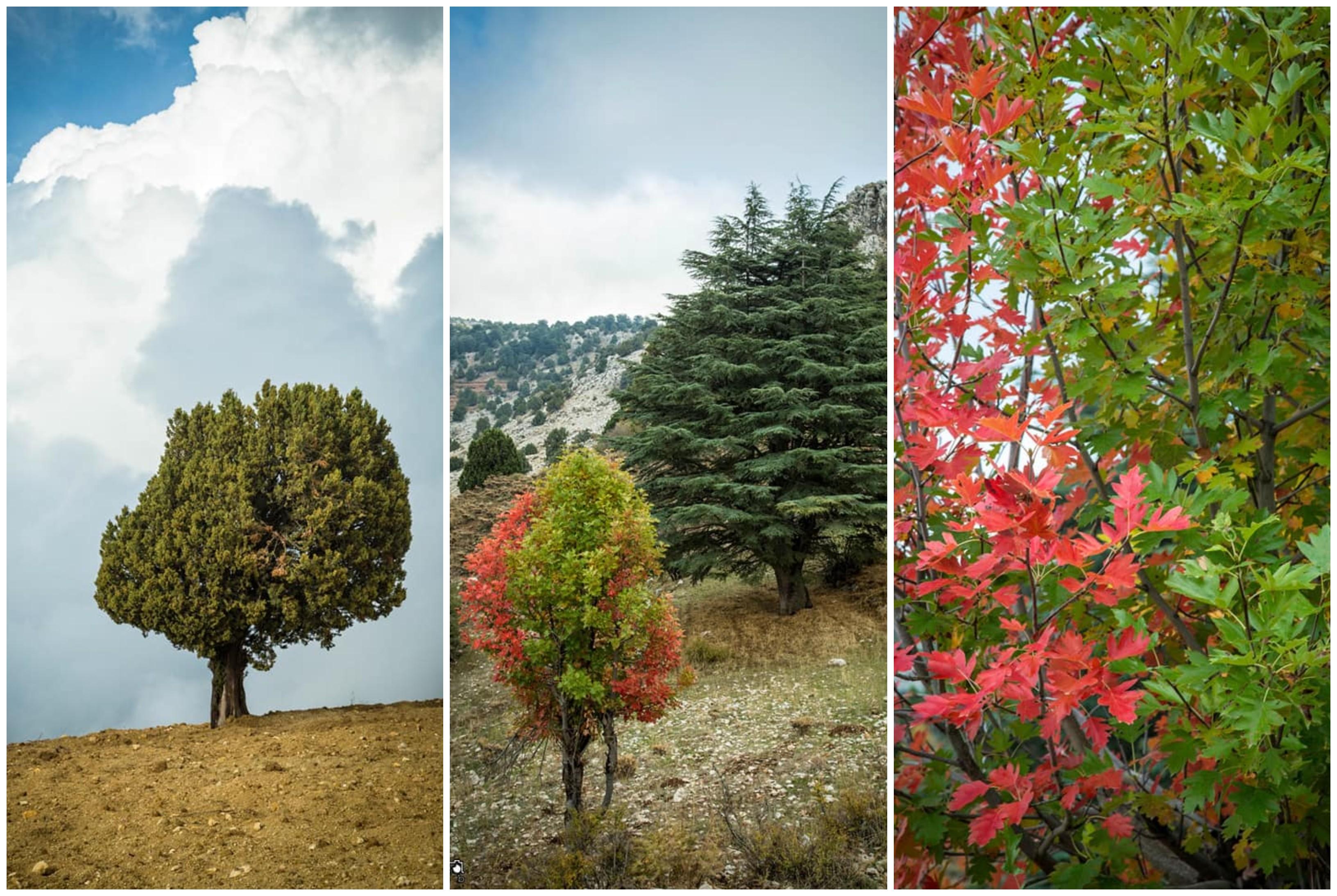 هكذا بدا الخريف من عكار...صور مذهلة تظهر سحر الطبيعة من غابات لبنان