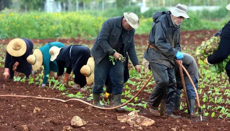 ثورة المزارعين تنطلق في كل لبنان خلال أسبوع وهي المهلة التي اعطتها النقابات الزراعية للحكومة لوقف استيراد والا سيصار الى إقفال كامل للمعابر البرية
