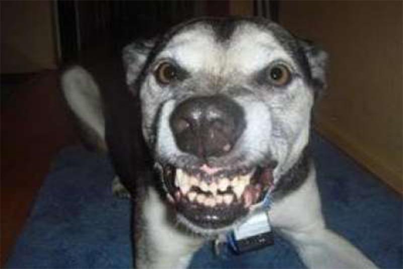 """""""عضة كلب شرس"""" تسببت بنقلهما إلى المستشفى...تعرض مواطنين من بلدة حانين لعضة كلب"""