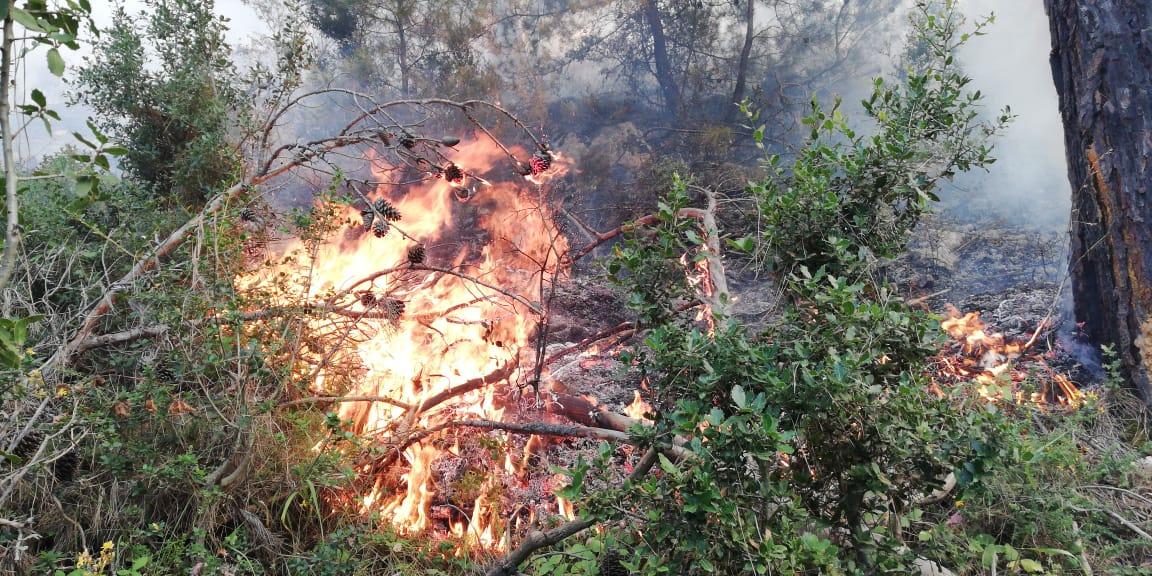 الحريق في عكار ما زال مشتعلا منذ البارحة رغم حضور طوافتان للجيش اللبناني وألسنة النار طالت حدود الـ15 متر!